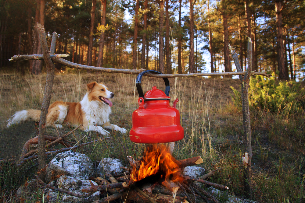Stay at a Campground with Your Dog