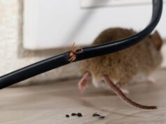 Electrical Wiring Rodents